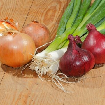 yellow red and green onions